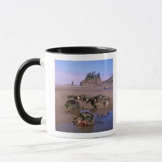 WA, olympisches NP, zweiter Strand mit tidepools Tasse