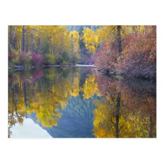 WA, Wenatchee staatlicher Wald, Whitepine Postkarte