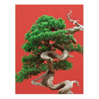 Wacholderbuschbonsais Postkarte