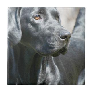Wachsame schwarze Labrador retriever-Hundefliese Keramikfliese