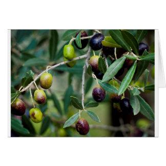 Wachsende Oliven Karte