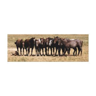 Wächter des Ponys Leinwanddruck