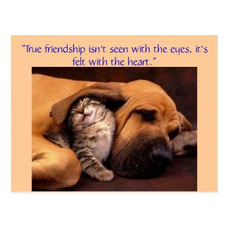 """""""Wahre Freundschaft… Postkarte"""