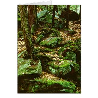 Wald # 1,5 karte