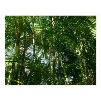 Wald des Palme-tropischen Grüns Postkarte