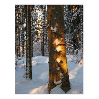 Wald im Winter Postkarte