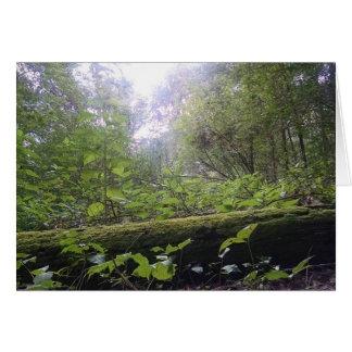 Wald Karte
