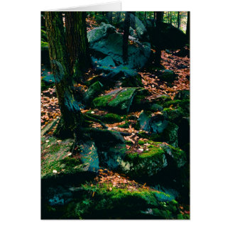 Wald mit Bereichen Karte