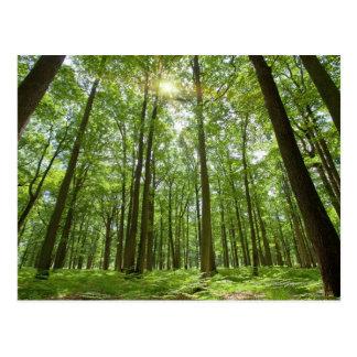 Wald mit Sun hinten Postkarte