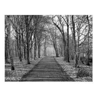 Wald, Schwarzes/Weiß Postkarte