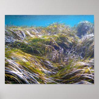 Wald von Neptun Gras in Unterwasserzypern Poster
