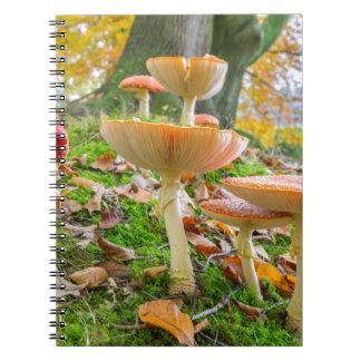 Waldboden mit Fliegenblätterpilzen und -Blätter im Spiral Notizblock