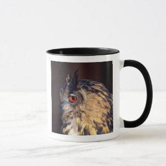 WaldEagle-Eule, Bubo Bubo, gebürtig zu Eurasien Tasse
