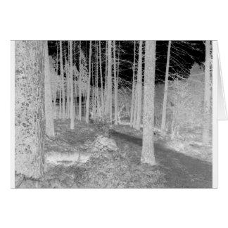 Wälder von Ardentiny Karte