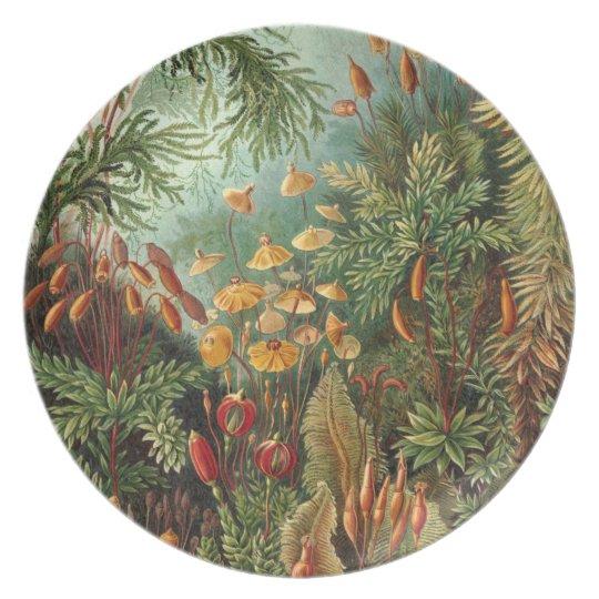 Waldflora Teller