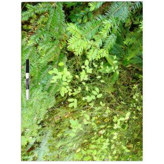 Waldholz-Wiesen-Farn-Oregon-Hinterphotographie Trockenlöschtafel