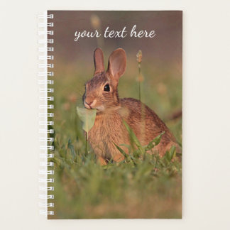 Waldkaninchen-Kaninchen Planer