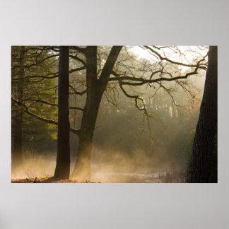 Waldsonnestrahlen und niedriger Nebel Poster