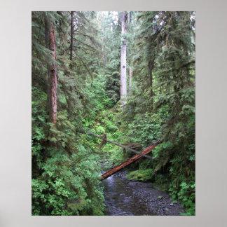 Waldstrom-Natur Poster