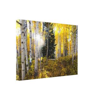 Waldungs-Leinwand Colorados Aspen Leinwanddruck
