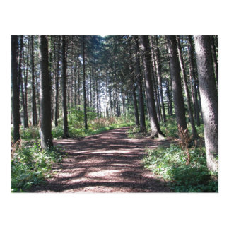 Waldweg-Sammlung Postkarten