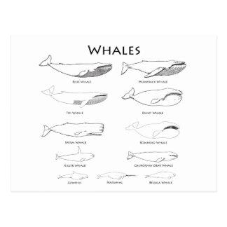 Wale (Linie Kunstillustrationen) Postkarten