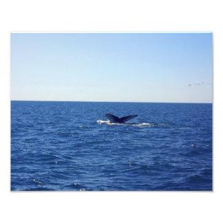 Walflosse mitten in dem Meer Fotodruck