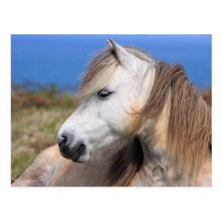 Waliser-Pony Postkarte