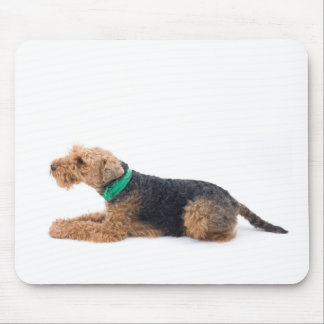 Waliser Terrier Mousepads