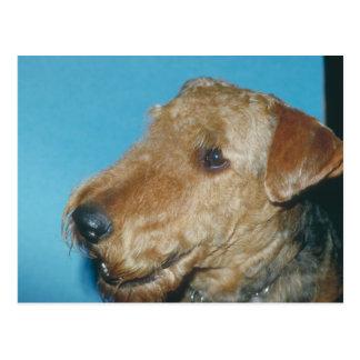 Waliser Terrier Postkarte