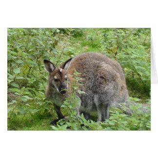 Wallaby in den Büschen Karte