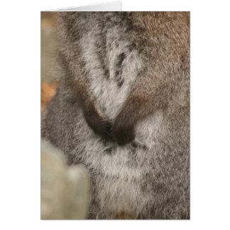 Wallaby Karte