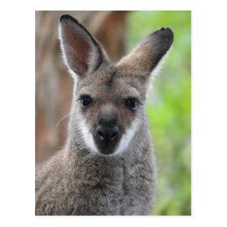 Wallaby-Postkarte Postkarte