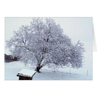 Walnuss-Baum nach Schneefällen Karte