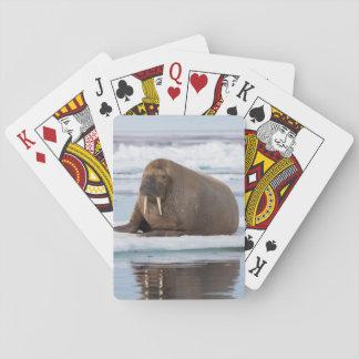 Walroß, das auf Eis, Norwegen stillsteht Spielkarten