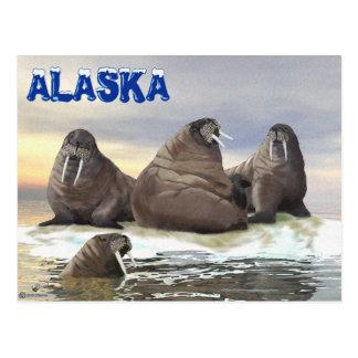 Walroß - vier Brüder Postkarte