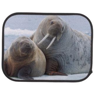 Walroßkuh- und -kalb-Erholung auf einem Seeeis Autofußmatte
