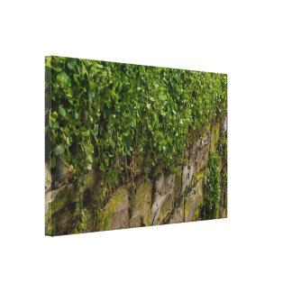 Wand des Efeus Leinwanddruck