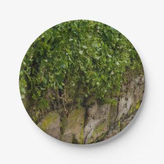 Wand des Efeus Pappteller
