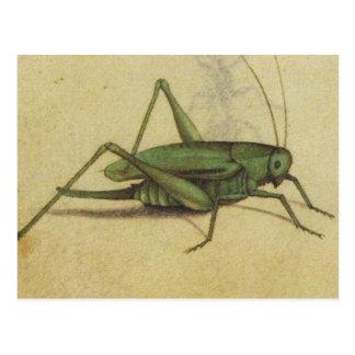 Wanzen-Kricket Vintag Postkarte