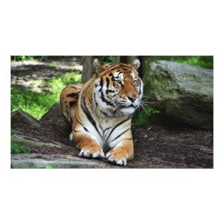 Wartete Tiger, Tigerphotographie, wildes Tier Fotos
