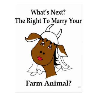 Was ist folgend? Heiraten Sie Ihr Vieh? Postkarte