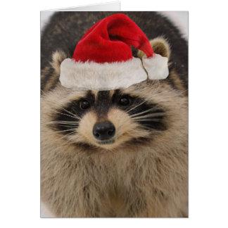 Waschbär-Weihnachtskarte Karte