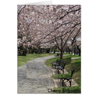 Washington-DC-Kirschblüte Karte