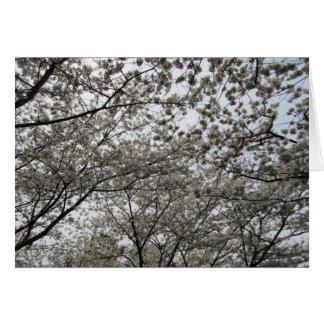 Washington DC-Kirschblüten-Bild Postkarte