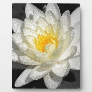 Wasser-Lilie 3 Fotoplatte