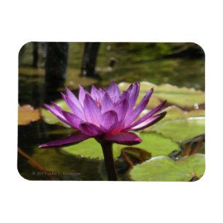 Wasser-Lilie Flexi Magnet
