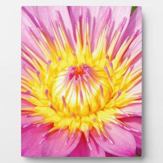 Wasser-Lilie Fotoplatte