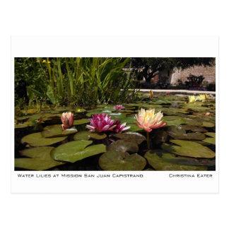 Wasser-Lilien am Auftrag San Juan Capistrano Postkarte