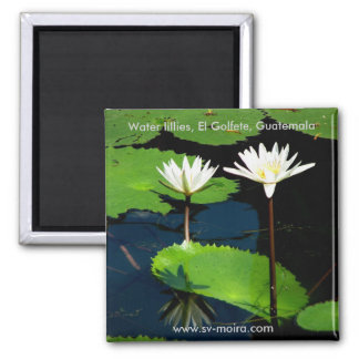 Wasser-Lilien, EL Golfete, Guatemala Quadratischer Magnet